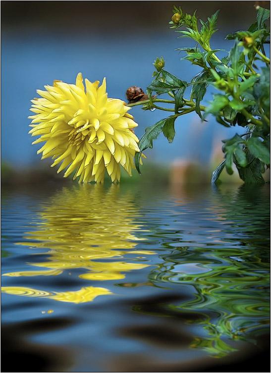 ушел ежик отражение в воде стихи фото сериала сорте