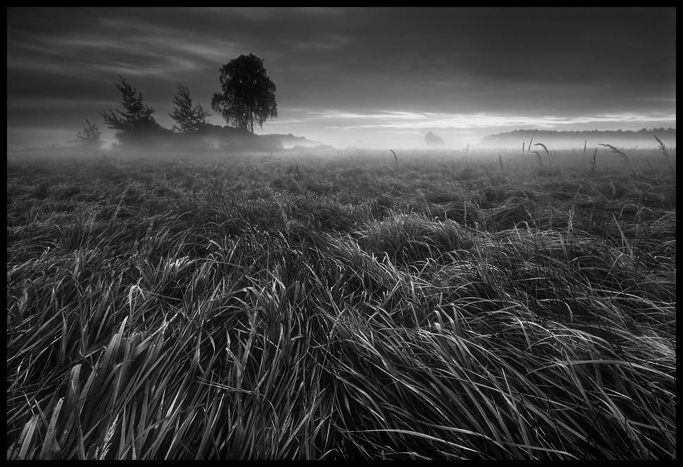"photo ""Grass"" tags: landscape,"
