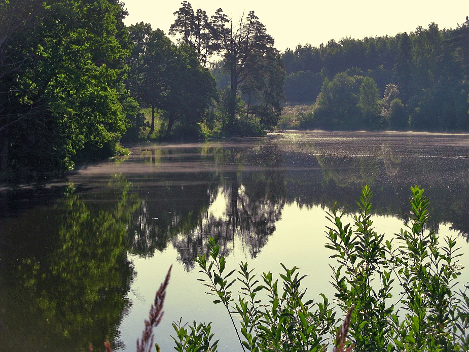 """photo """"Early morning on lake"""" tags: landscape, summer, water"""