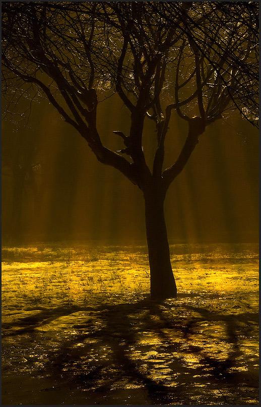дождь золотой фото русское