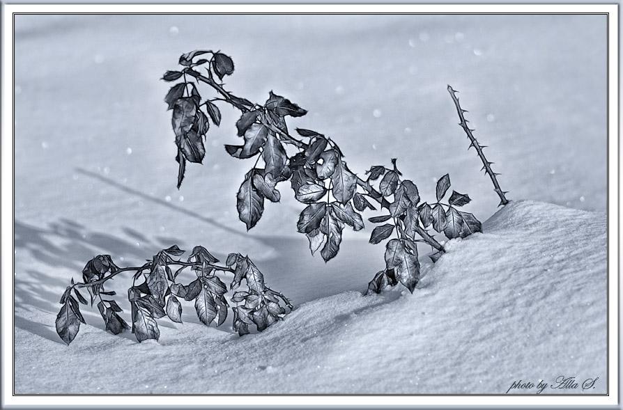 "photo ""***"" tags: black&white, nature, flowers"