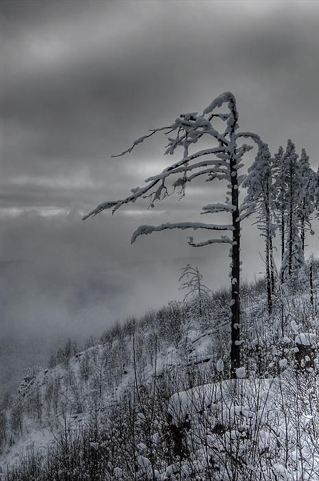 "photo ""Winter in Rodopi mountain"" tags: landscape, winter"
