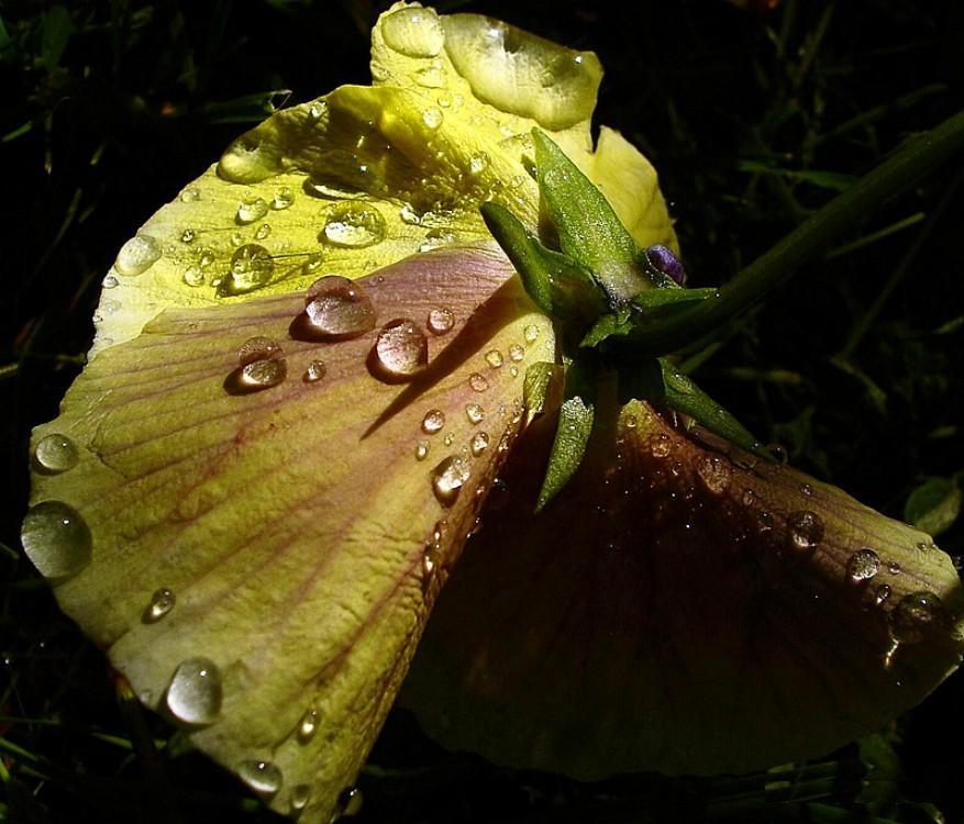 """фото """"Встречая рассвет..."""" метки: природа, макро и крупный план,"""
