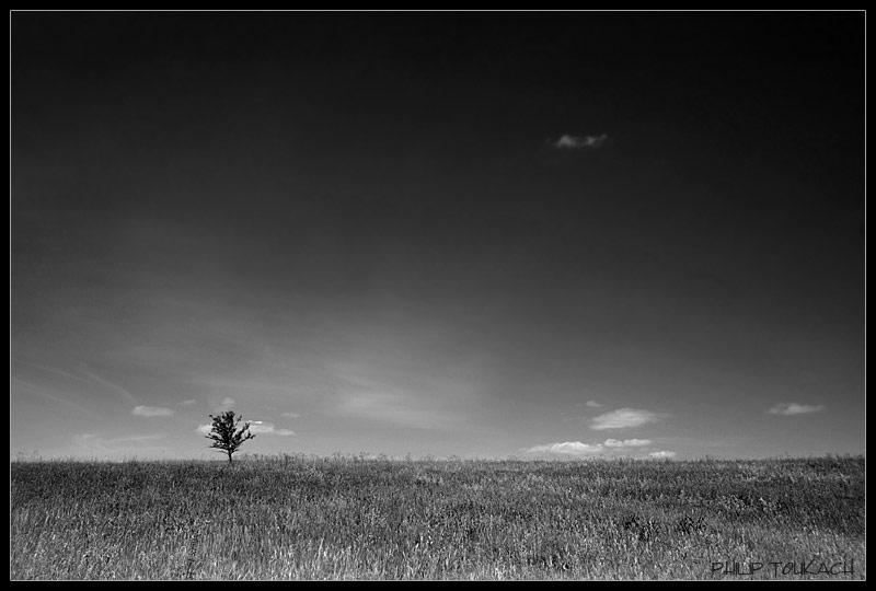 "фото ""Lonely"" метки: пейзаж, черно-белые, лето"
