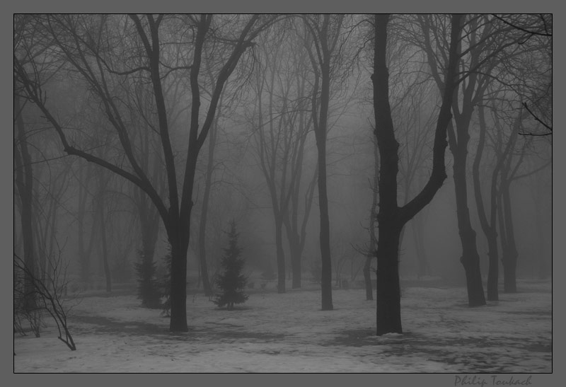 "photo ""The last winter"" tags: landscape, autumn, forest"