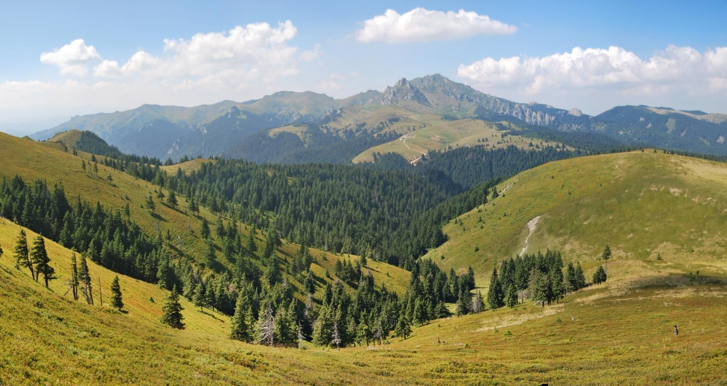 """photo """"***"""" tags: landscape, forest, mountains"""