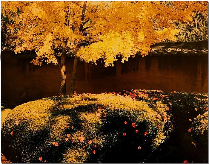 """фото """"Golden Gingko"""" метки: пейзаж, осень"""