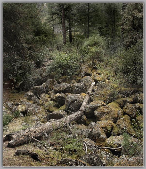 """фото """"Там, где нет троп"""" метки: пейзаж, горы"""