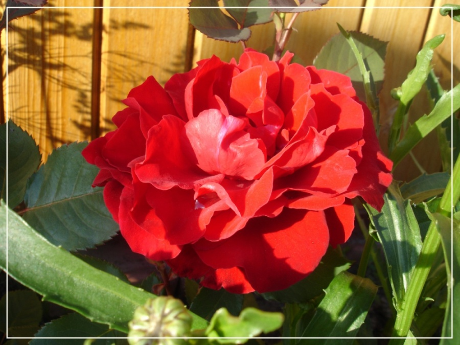 """фото """"Красный цветок"""" метки: природа, цветы"""