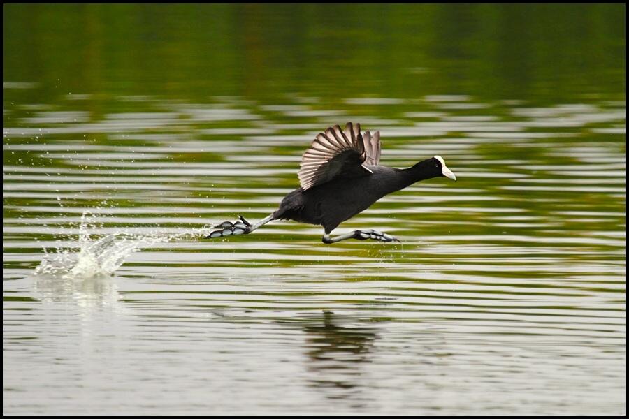 "photo ""jump"" tags: nature, wild animals"