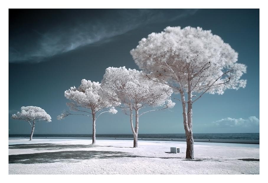 "фото ""Landscape with white trees"" метки: пейзаж, лето"