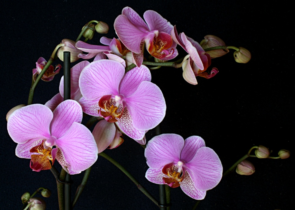"""photo """"orchids #5"""" tags: nature, still life, flowers"""