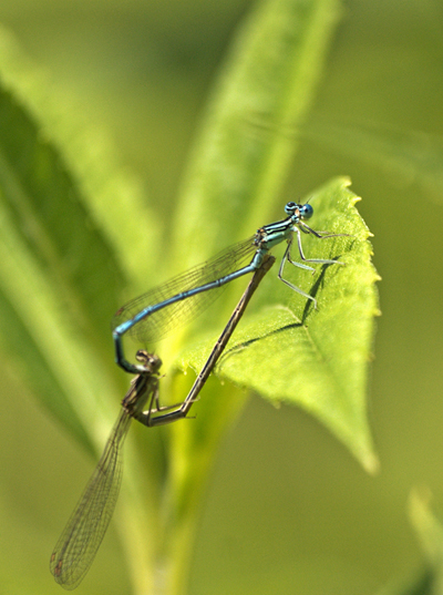 """photo """"Love"""" tags: nature, macro and close-up, insect"""