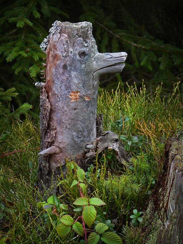 "photo ""Forest inhabitants 1"" tags: landscape, still life, autumn"