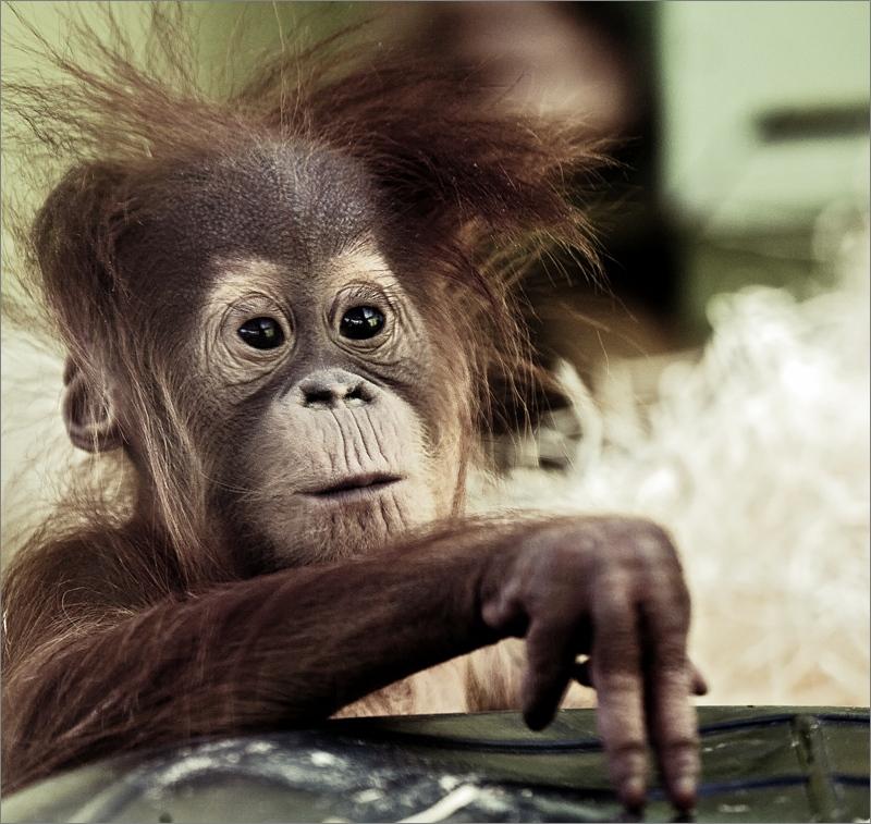 """фото """"Деньги на бочку!"""" метки: природа, юмор, дикие животные"""