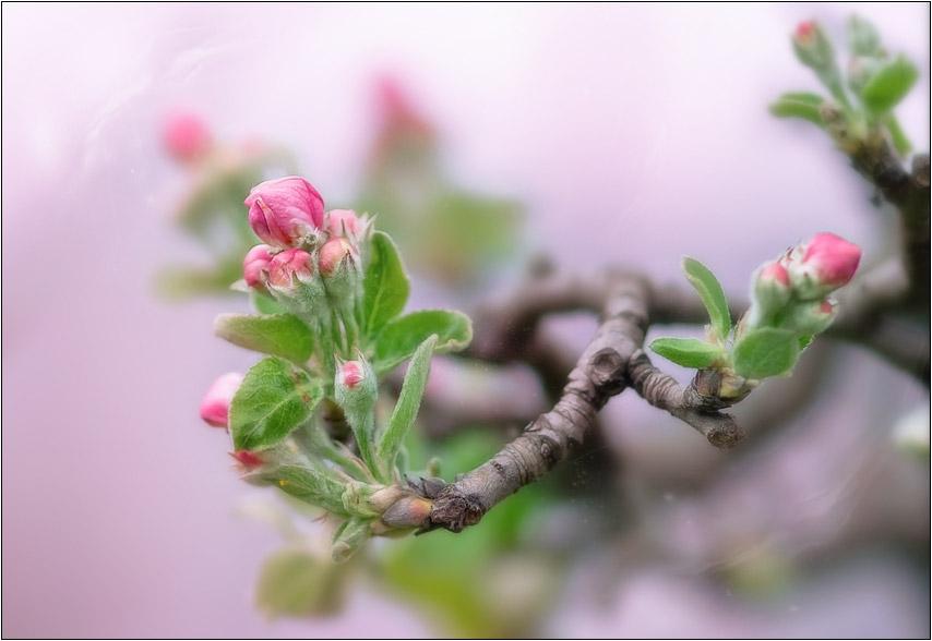 """фото """"Сон в розовом цвете"""" метки: пейзаж, природа, весна, цветы"""