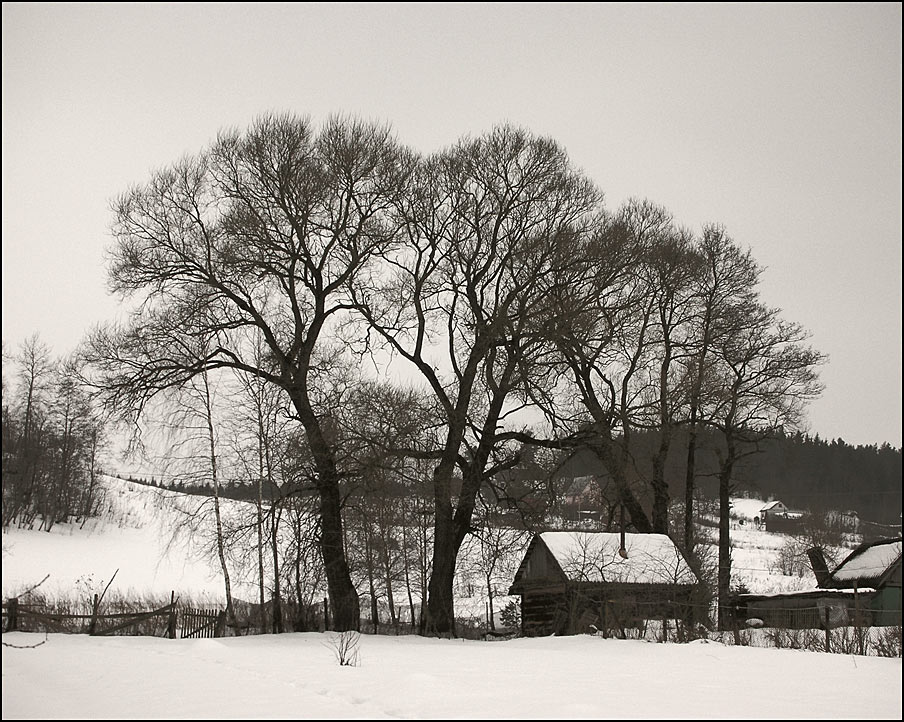 "photo ""Graphic winter end"" tags: landscape, winter"
