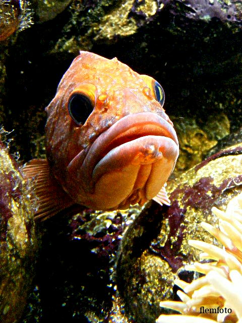 """фото """"Red fish,"""" метки: пейзаж, вода"""