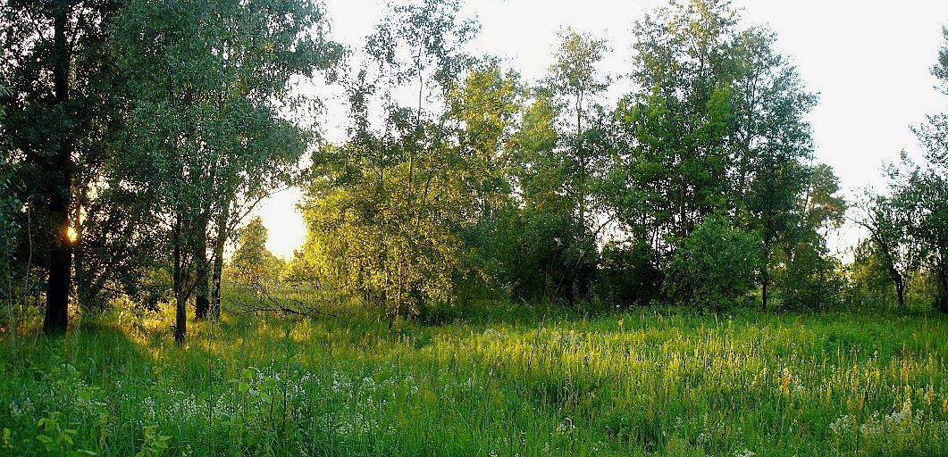 """фото """"На солнечной поляночке..."""" метки: пейзаж, лес, лето"""