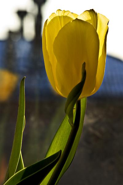 """фото """"Цветочная 19."""" метки: природа, цветы"""