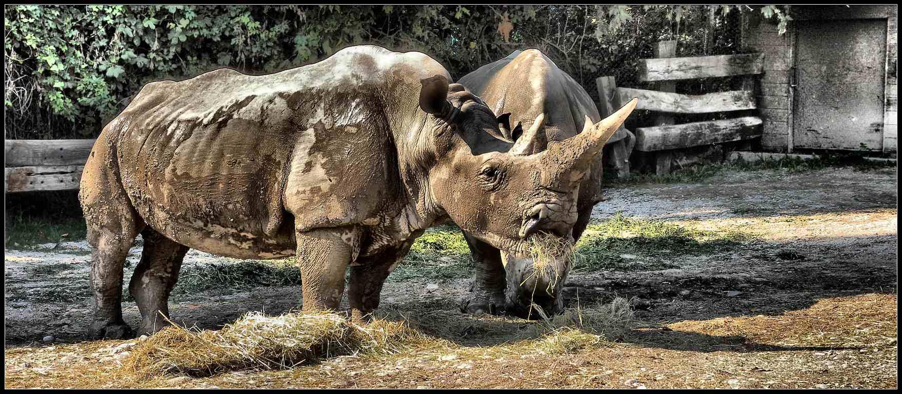 """фото """"первобытные"""" метки: природа, digital art, дикие животные"""