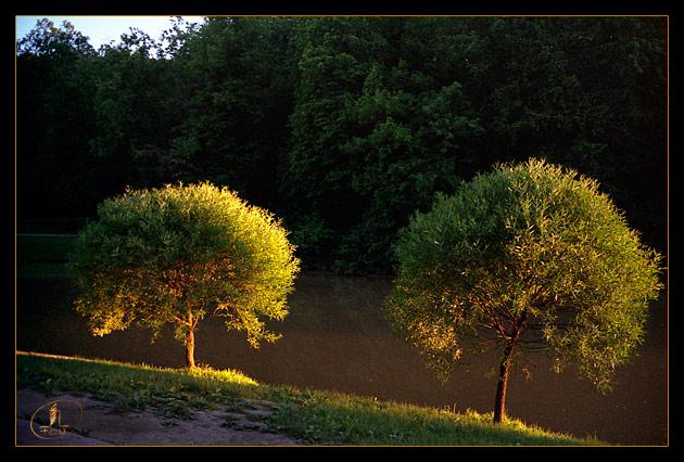 "photo ""Twain"" tags: nature, landscape, flowers, summer"