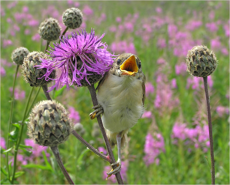 "photo ""Kinder Surprise"" tags: nature, wild animals"
