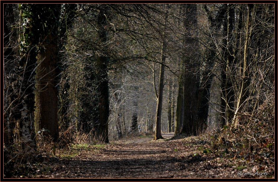 "photo ""dark wook"" tags: landscape, forest, winter"