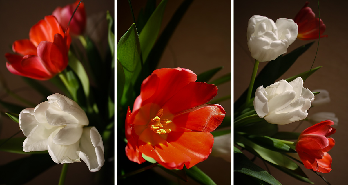 """photo """"Tulips"""" tags: nature, flowers"""