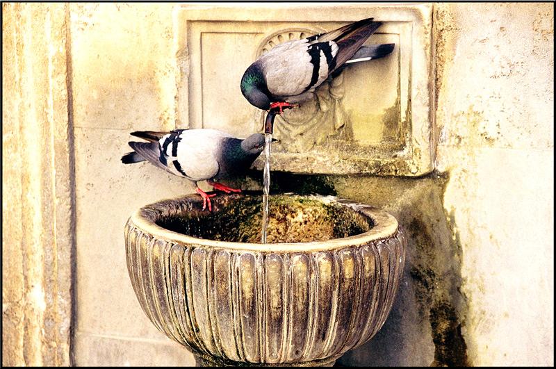 "photo ""Heat / Жар"" tags: nature, travel, pets/farm animals"