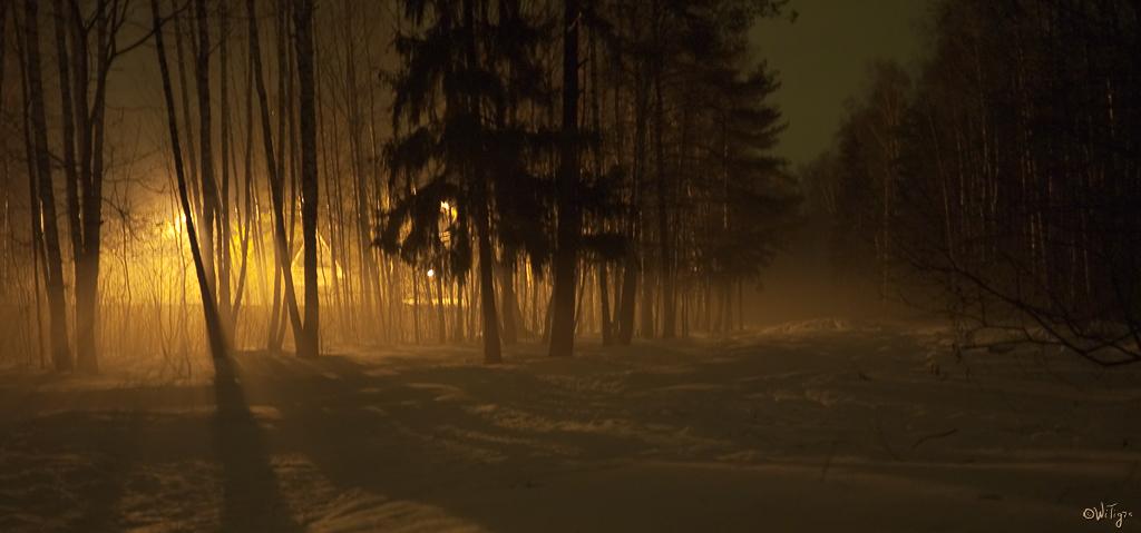 "photo ""Evening fog"" tags: landscape, forest, spring"