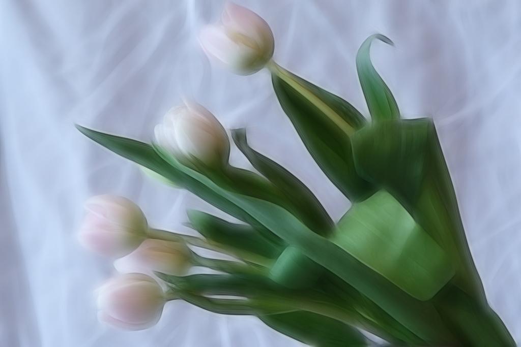 "photo ""the tulip"" tags: nature, digital art, flowers"