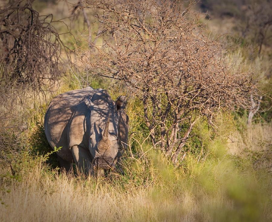 "photo ""Rino's aslo play bo-peep"" tags: nature, travel, Africa, wild animals"