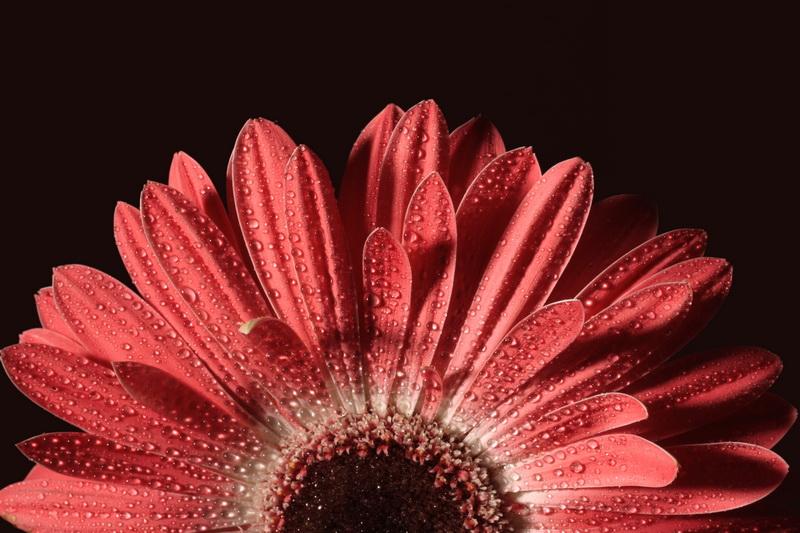 "photo ""sun rises"" tags: nature, flowers"