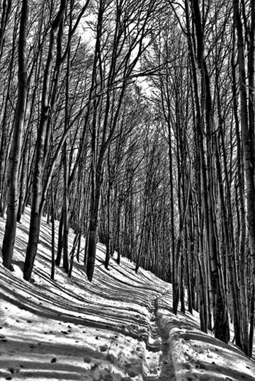"""photo """"lines"""" tags: landscape, black&white,"""