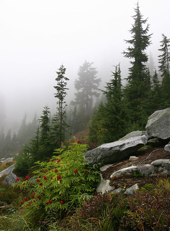 "photo ""Elderberry"" tags: landscape, forest, mountains"
