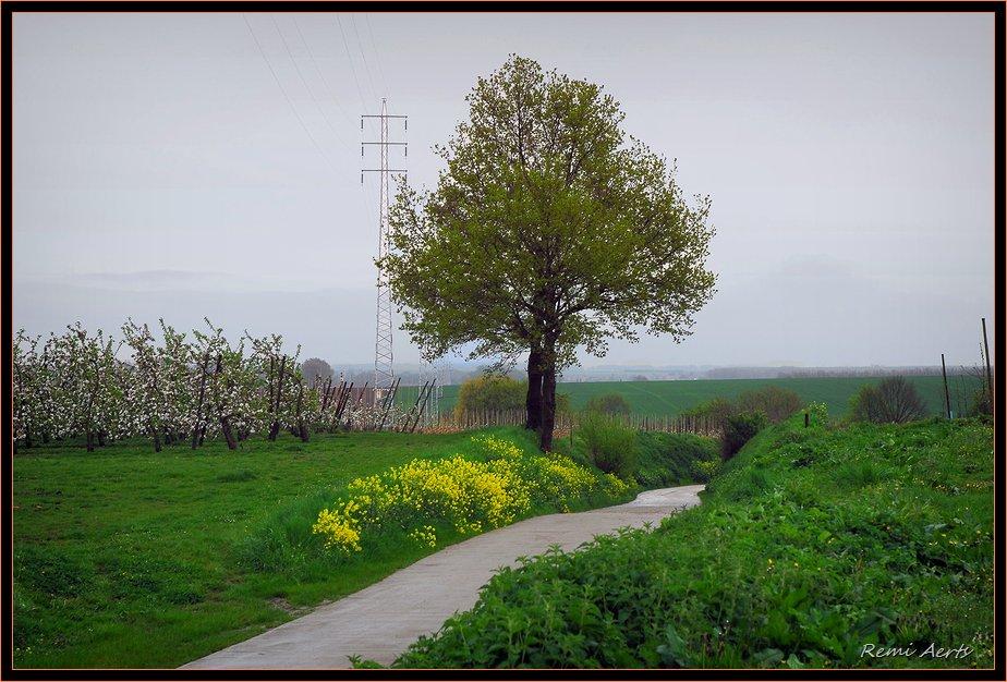 "photo ""spring 2009"" tags: landscape, spring"