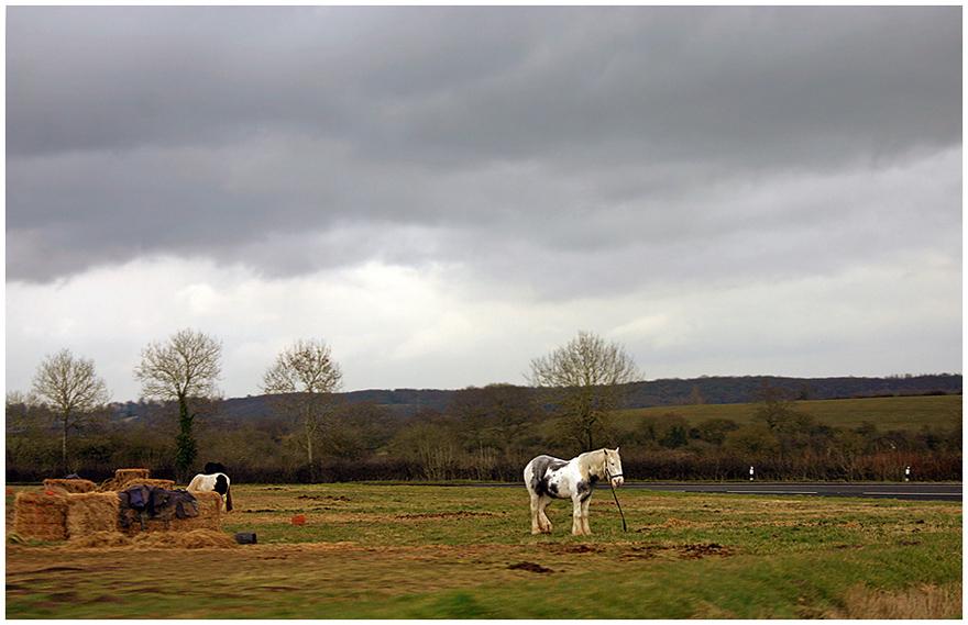 """photo """"***"""" tags: landscape, nature, pets/farm animals, лошади"""