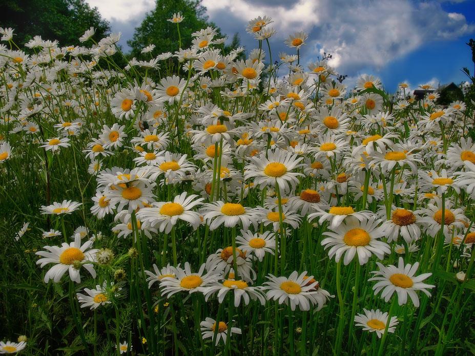 "photo ""***"" tags: nature, landscape, flowers, summer"