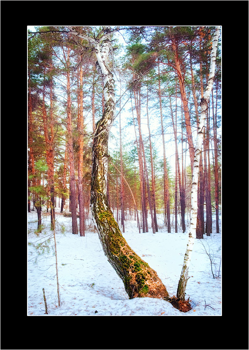 """photo """"Landscape of one tree-2"""" tags: landscape, forest"""