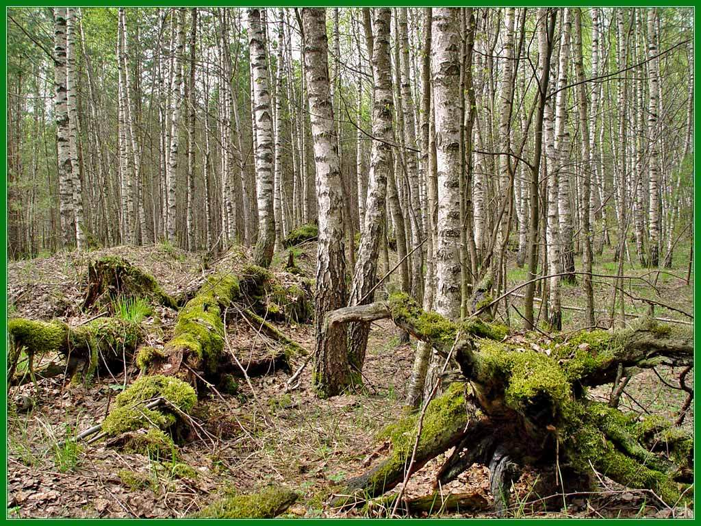 "photo ""windfall"" tags: landscape, forest, spring"
