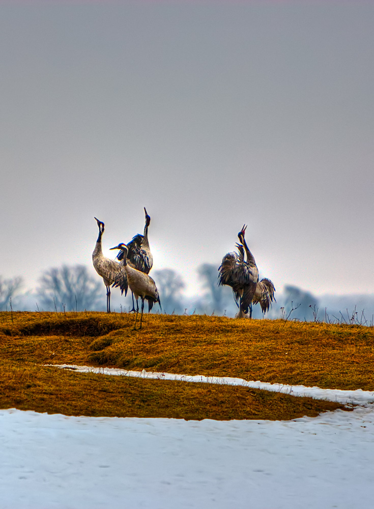 "photo ""Dancing"" tags: nature, wild animals"