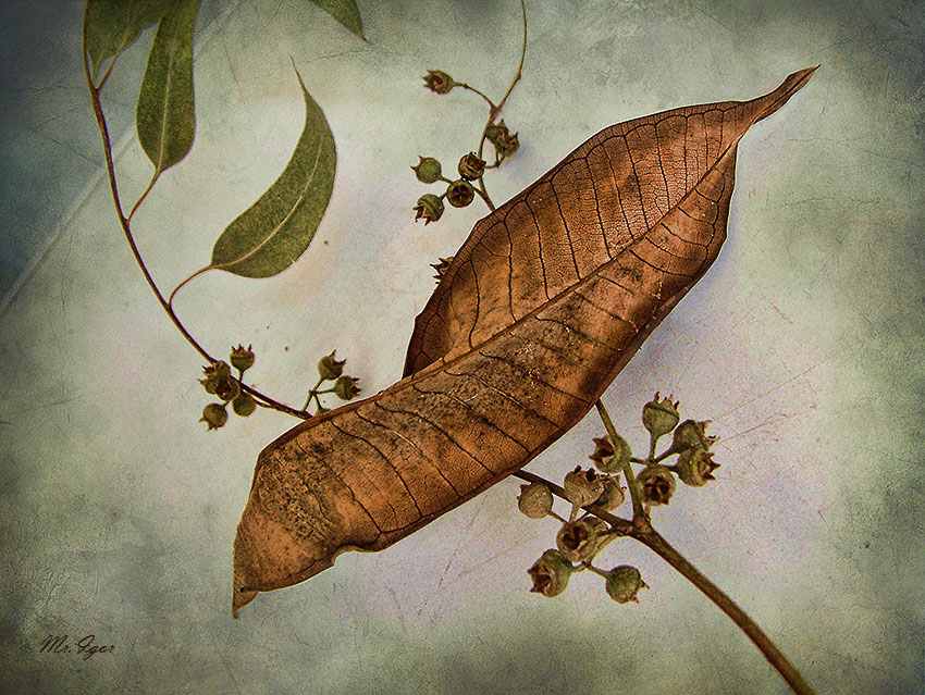 "photo ""The last leaf of autumn"" tags: still life, nature, flowers"