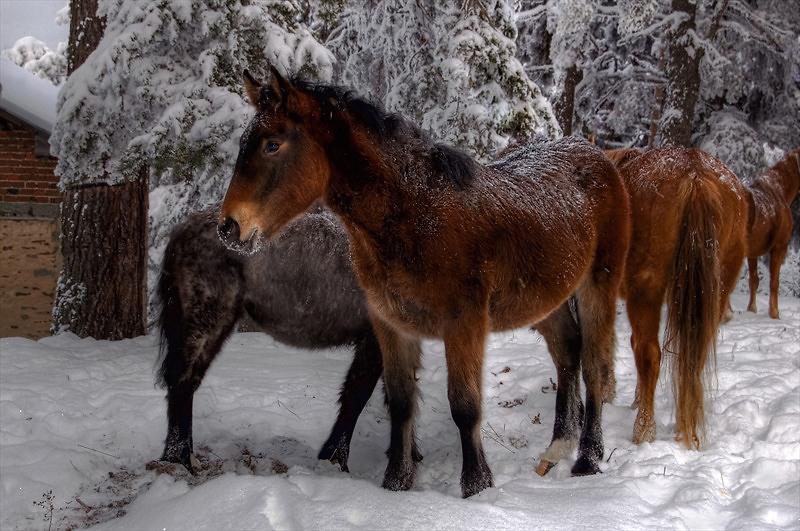 "photo ""SURVIVOR"" tags: nature, pets/farm animals"
