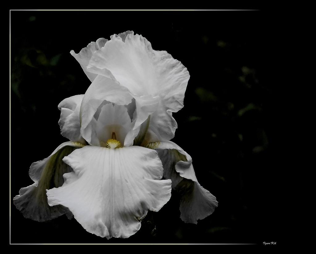 """photo """"***"""" tags: nature, flowers"""