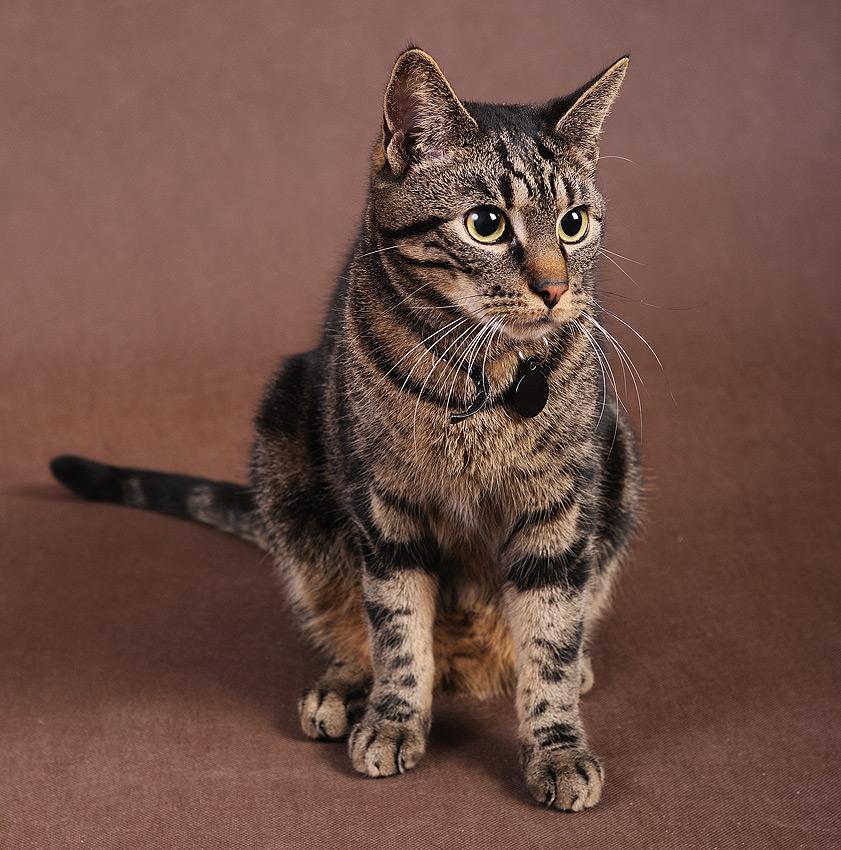"photo ""hmm cat?"" tags: nature, pets/farm animals"