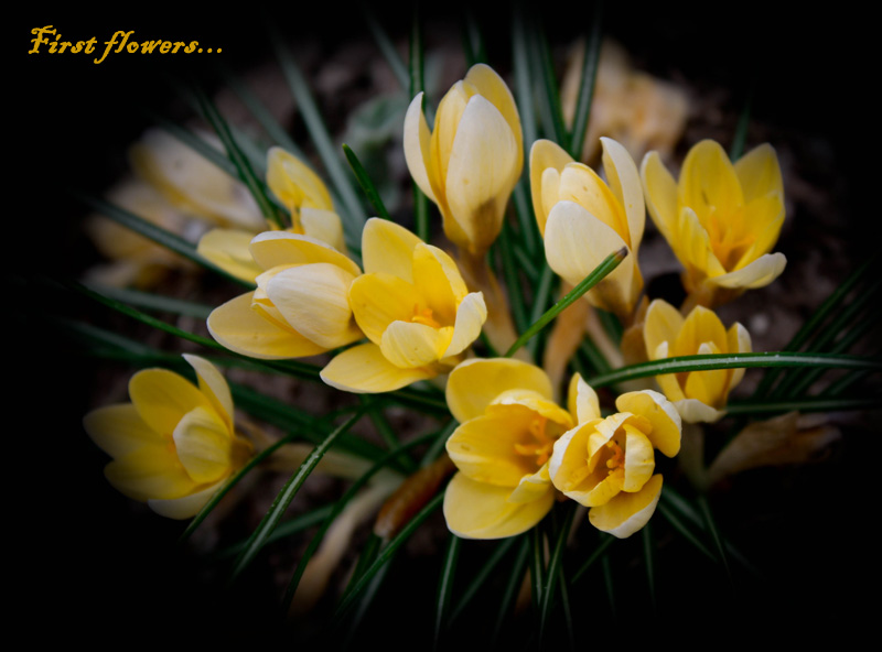 "photo ""First flowers"" tags: nature, macro and close-up, flowers"