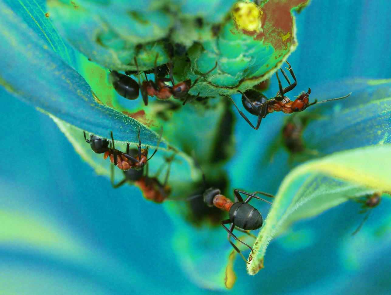 """photo """"The fanatics (2)"""" tags: nature, insect"""