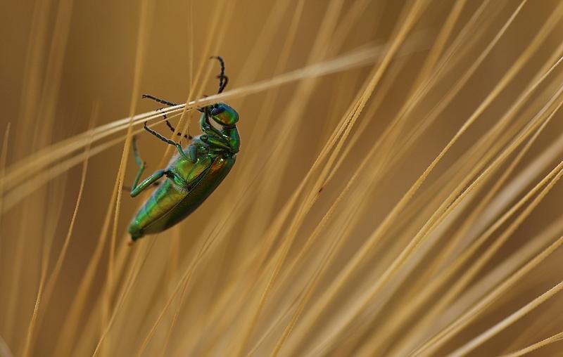 "photo ""Bug..."" tags: nature, macro and close-up, insect"
