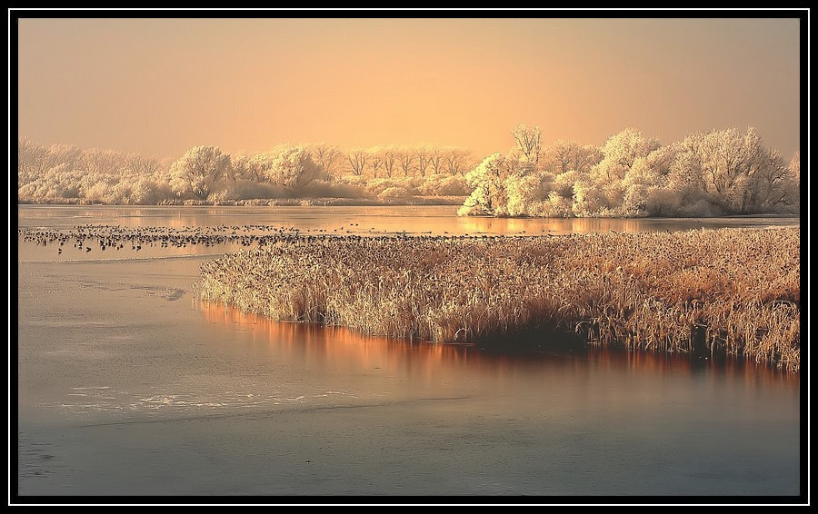 "photo ""GOLDEN MORNINGLIGHT."" tags: ,"